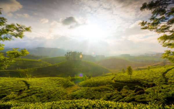 munnar_hills_kerala_india-wide