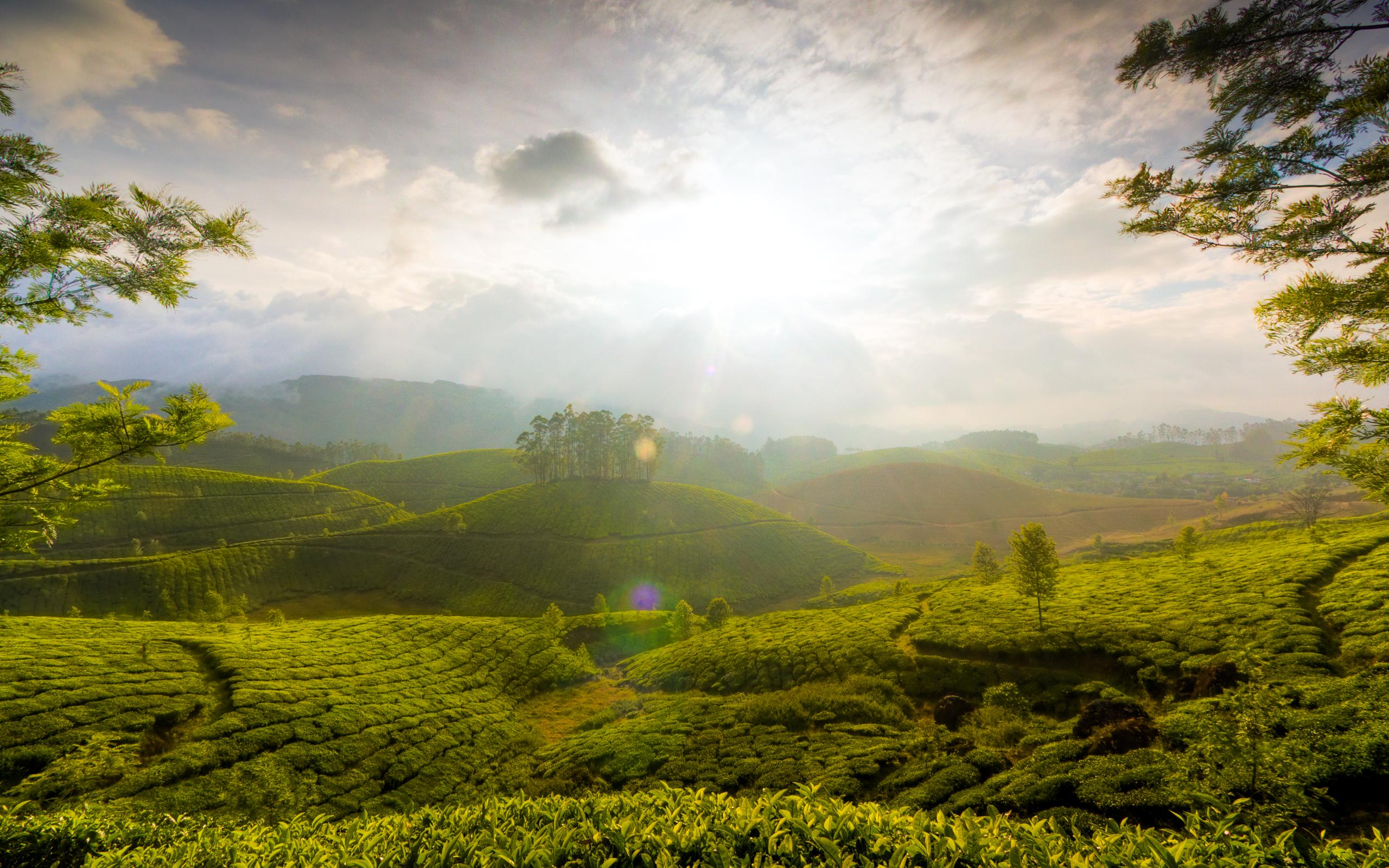 munnar_hills_kerala_india-wide